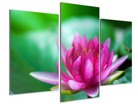Aluminiumbild 3-teilig modern Lotus in Pink