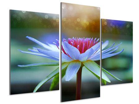 Aluminiumbild 3-teilig modern Pretty Lotus