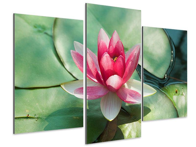 Aluminiumbild 3-teilig modern Der Frosch und das Lotusblatt
