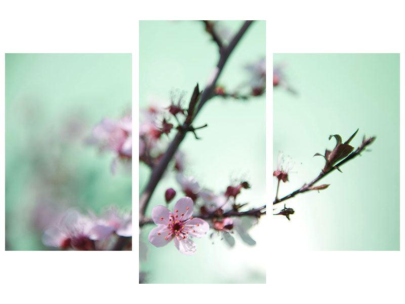 Aluminiumbild 3-teilig modern Die japanische Kirschblüte