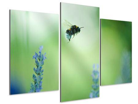 Aluminiumbild 3-teilig modern Die Biene