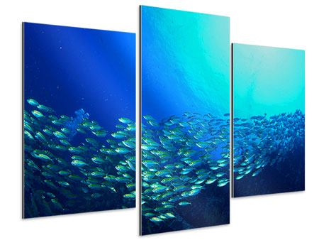 Aluminiumbild 3-teilig modern Fischschwarm