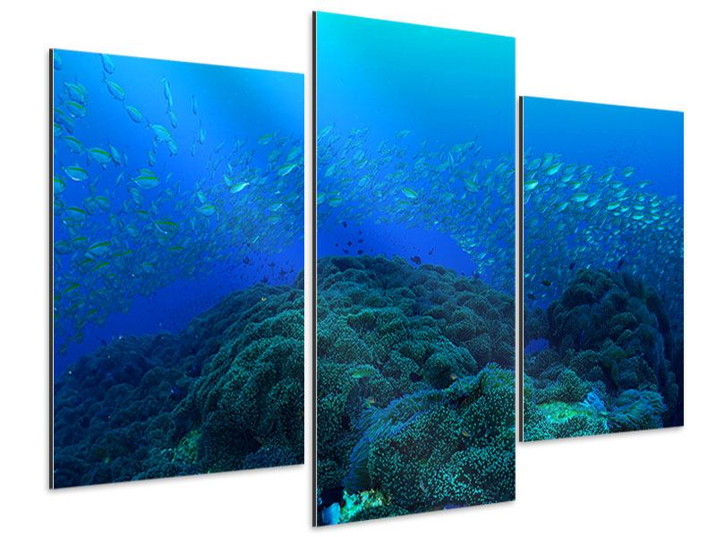 Aluminiumbild 3-teilig modern Fischschwärme