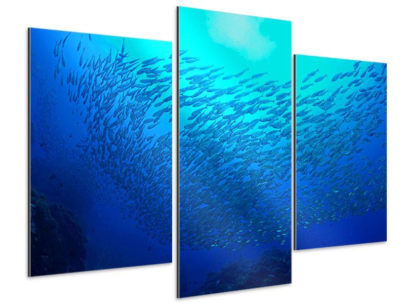Aluminiumbild 3-teilig modern Fischwelt