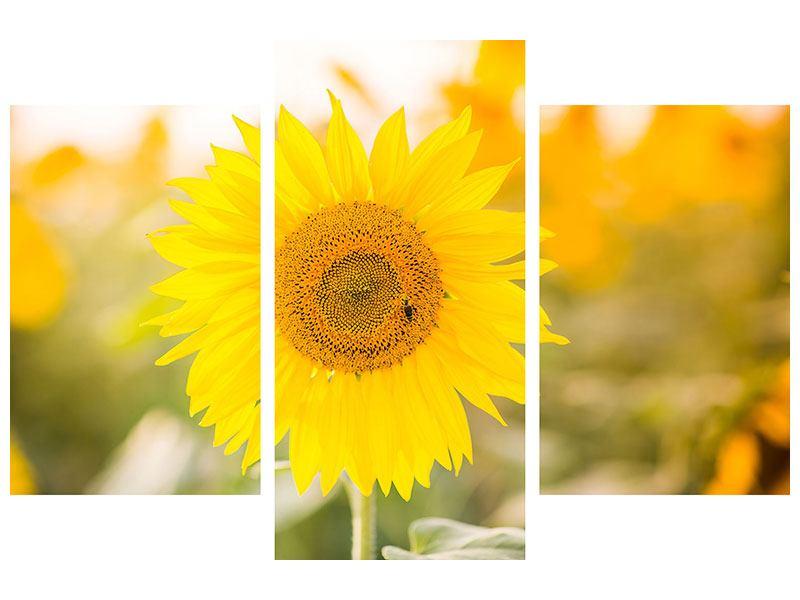 Aluminiumbild 3-teilig modern Sunflower