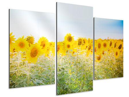 Aluminiumbild 3-teilig modern Im Sonnenblumenfeld