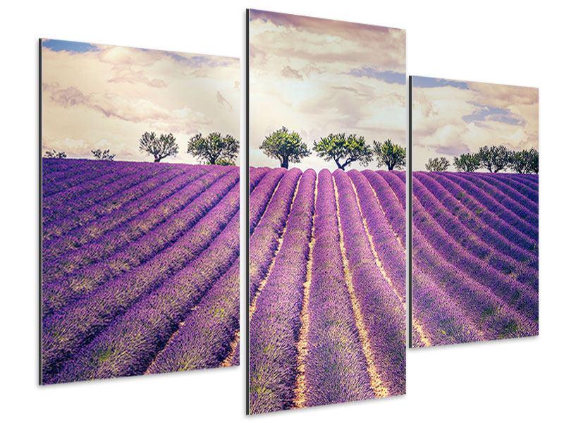 Aluminiumbild 3-teilig modern Das Lavendelfeld