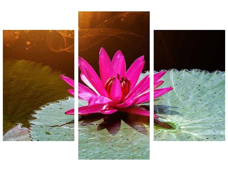 Aluminiumbild 3-teilig modern Der Frosch und das Seerosenblatt