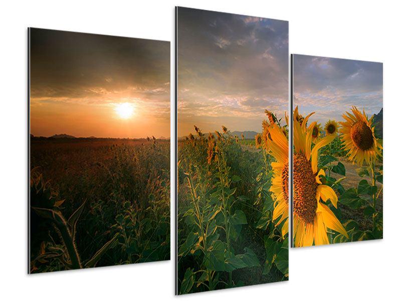 Aluminiumbild 3-teilig modern Sonnenblumen im Lichtspiel