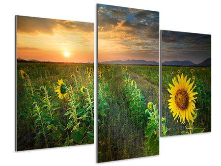 Aluminiumbild 3-teilig modern Sonnenblumenfeld im Abendrot