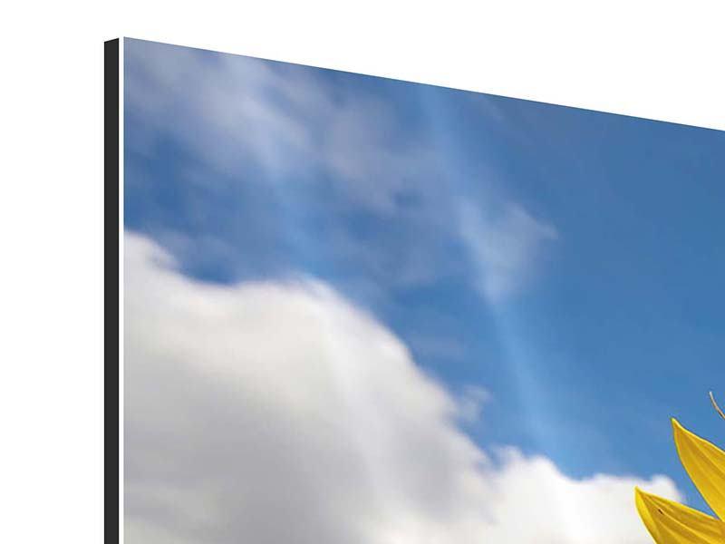Aluminiumbild 3-teilig modern Das Feld der Sonnenblumen