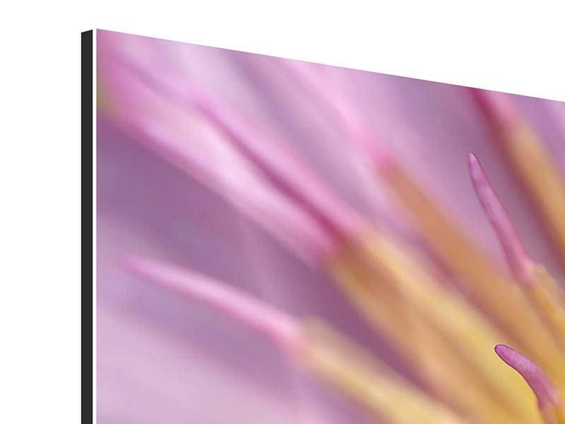 Aluminiumbild 3-teilig modern XXL-Lotus