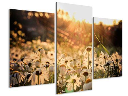 Aluminiumbild 3-teilig modern Gänseblümchen bei Sonnenuntergang