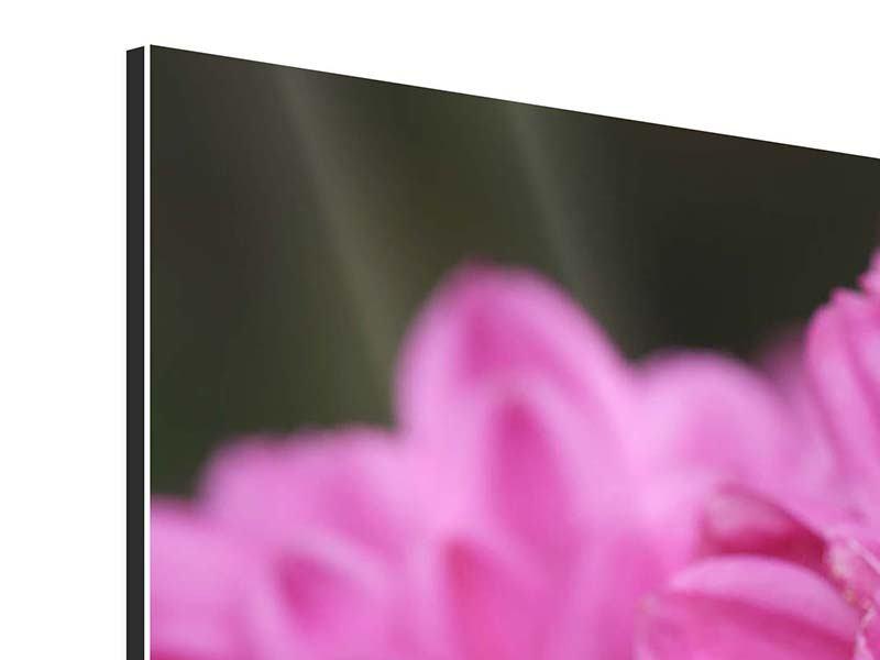 Aluminiumbild 3-teilig modern Chrysanthemen