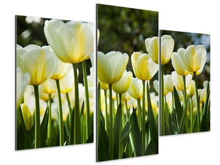 Aluminiumbild 3-teilig modern Tulpen bei Sonnenuntergang