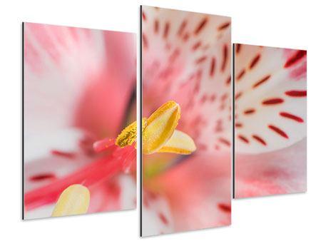 Aluminiumbild 3-teilig modern Der Lilienstempel