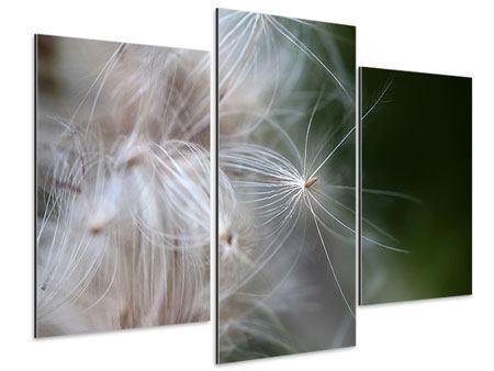 Aluminiumbild 3-teilig modern Close up Blütenfasern