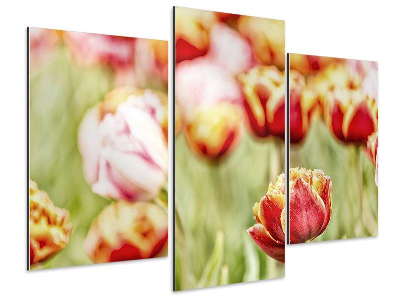 Aluminiumbild 3-teilig modern Die Schönheit der Tulpe