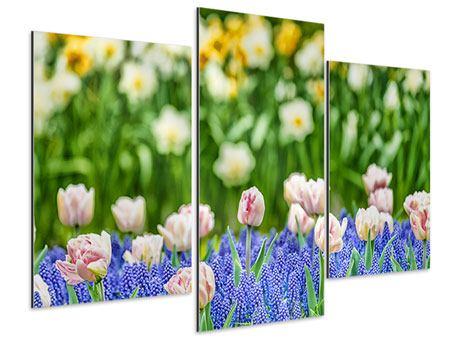 Aluminiumbild 3-teilig modern Ein Garten mit Tulpen