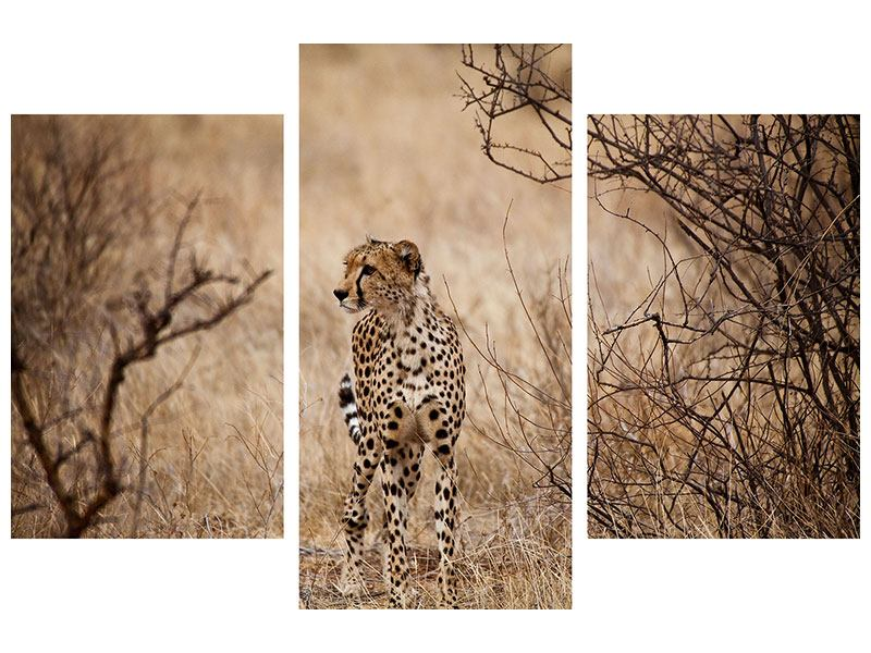 Aluminiumbild 3-teilig modern Eleganter Gepard