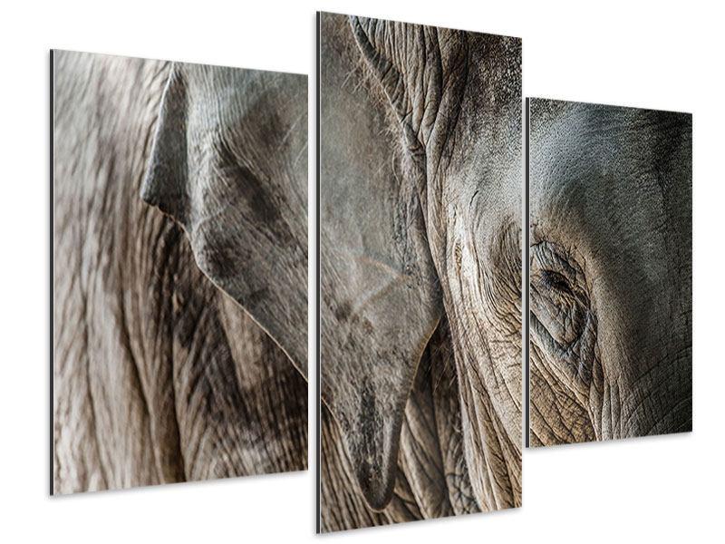 Aluminiumbild 3-teilig modern Close Up Elefant