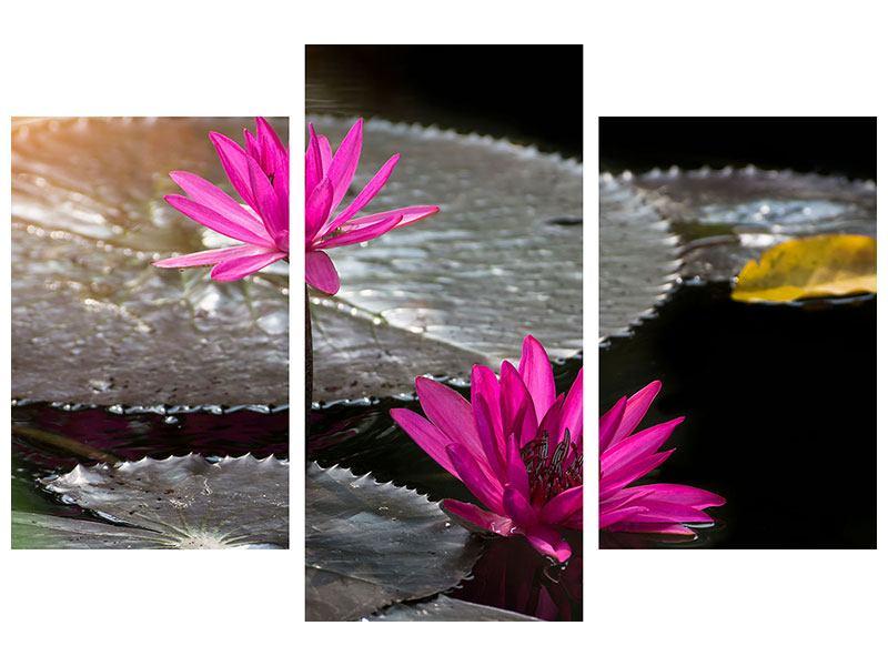Aluminiumbild 3-teilig modern Seerosen im Morgentau