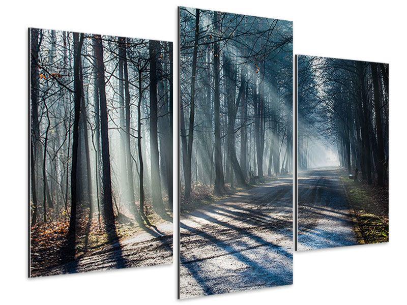 Aluminiumbild 3-teilig modern Wald im Lichtstrahl