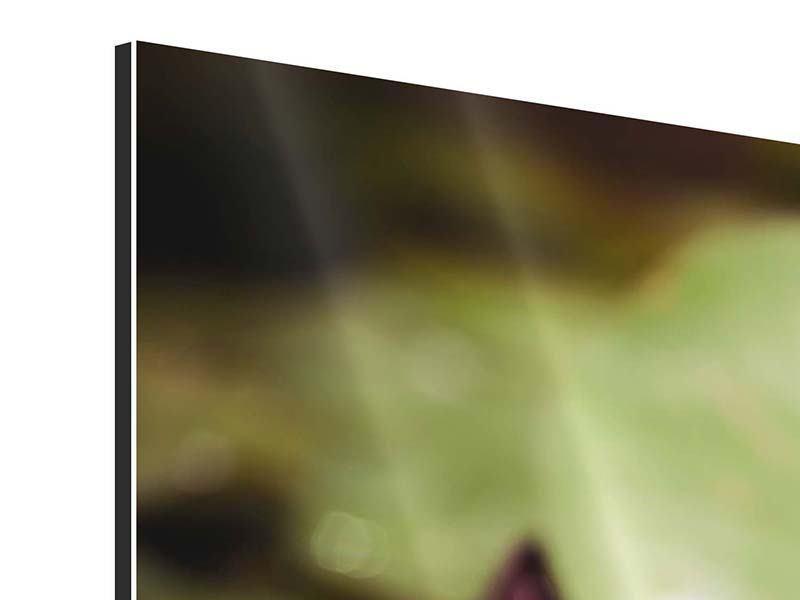 Aluminiumbild 3-teilig modern Seerosen bei Sonnenaufgang
