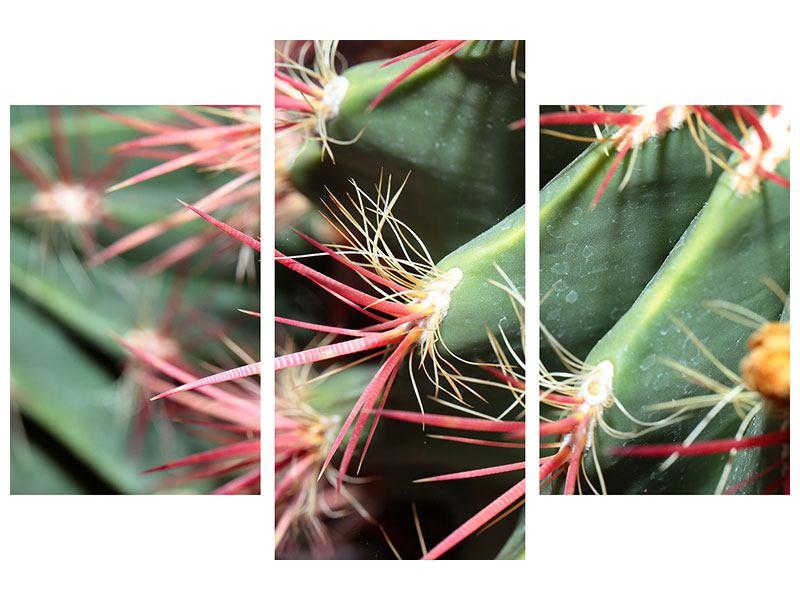 Aluminiumbild 3-teilig modern Die Kaktusblüte