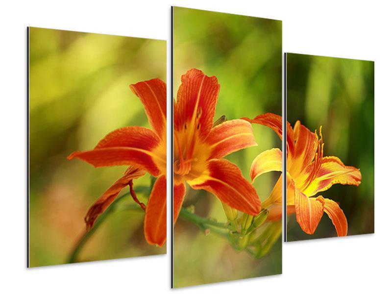 Aluminiumbild 3-teilig modern Natural Lilien
