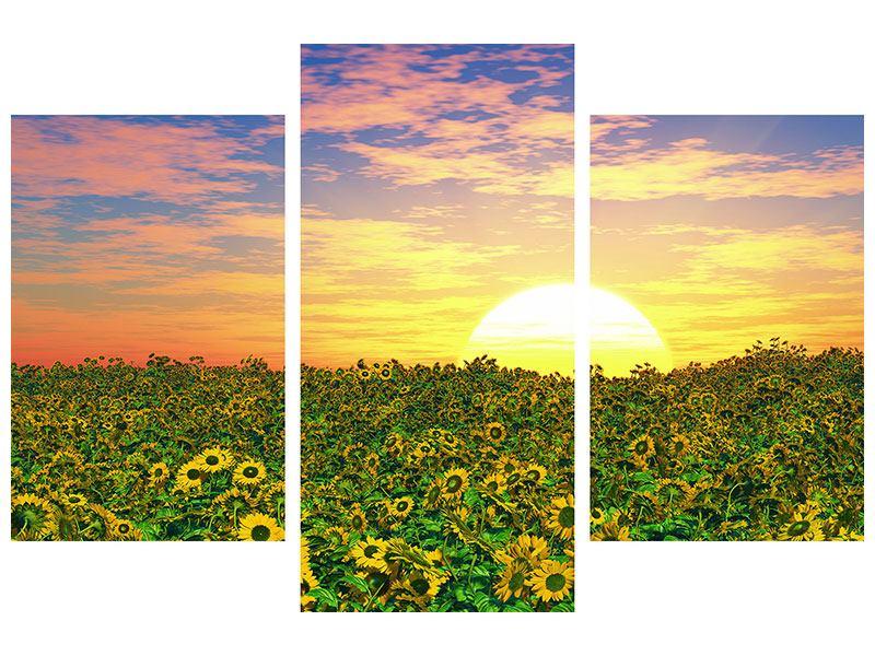Aluminiumbild 3-teilig modern Blumenpanorama bei Sonnenuntergang