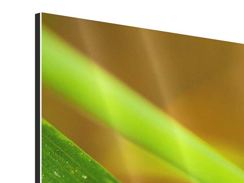 Aluminiumbild 3-teilig modern XXL Marienkäfer