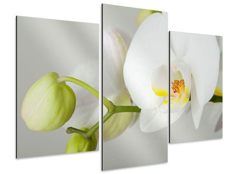 Aluminiumbild 3-teilig modern Riesenorchidee