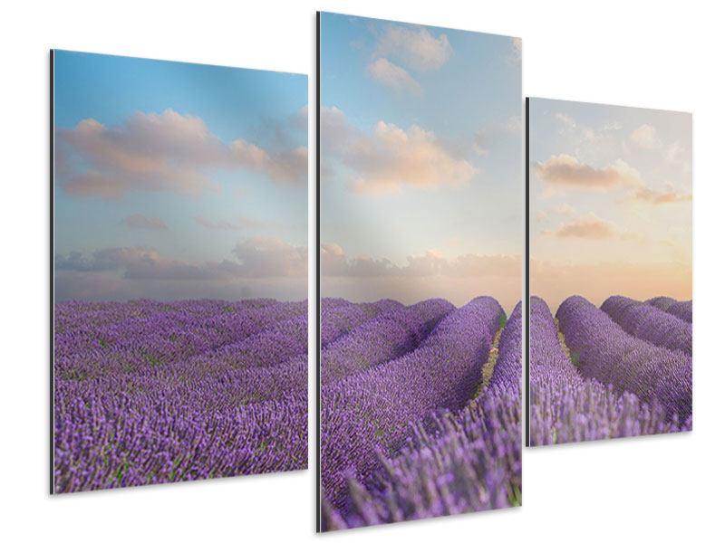 Aluminiumbild 3-teilig modern Das blühende Lavendelfeld