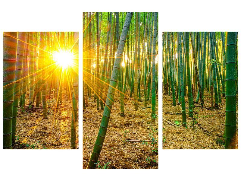 Aluminiumbild 3-teilig modern Bambusse