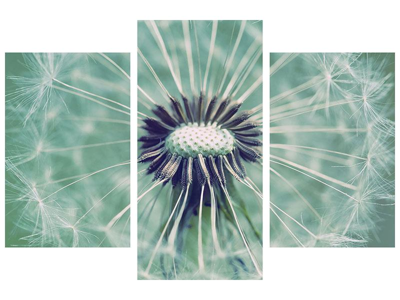 Aluminiumbild 3-teilig modern Close Up Pusteblume