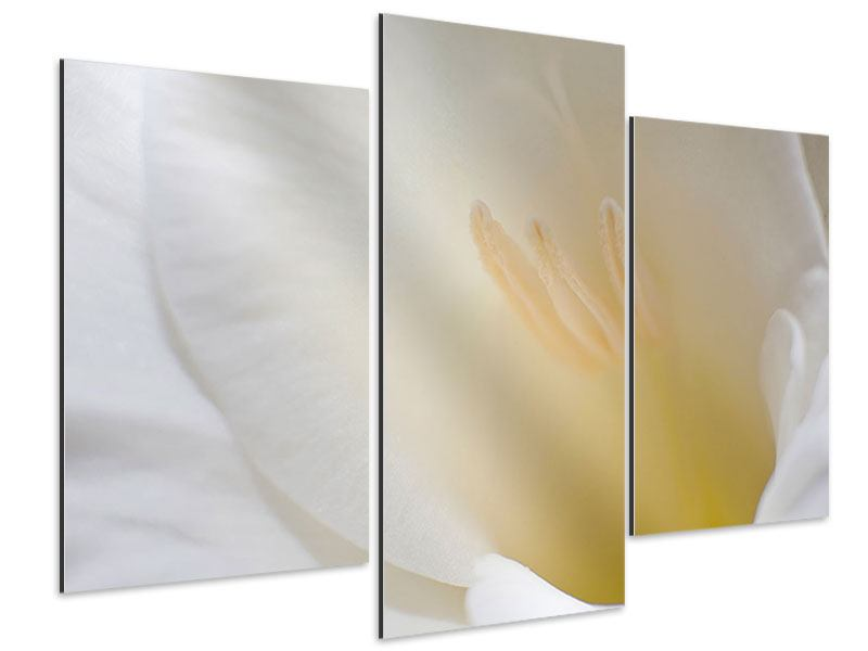 Aluminiumbild 3-teilig modern In einer Blüte