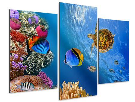 Aluminiumbild 3-teilig modern Fisch im Wasser