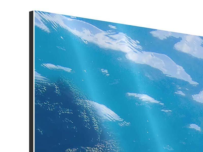Aluminiumbild 3-teilig modern Die Wasserschildkröte