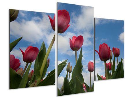 Aluminiumbild 3-teilig modern Tulpen im Himmel