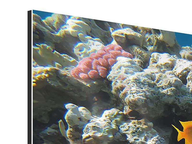 Aluminiumbild 3-teilig modern Das Aquarium