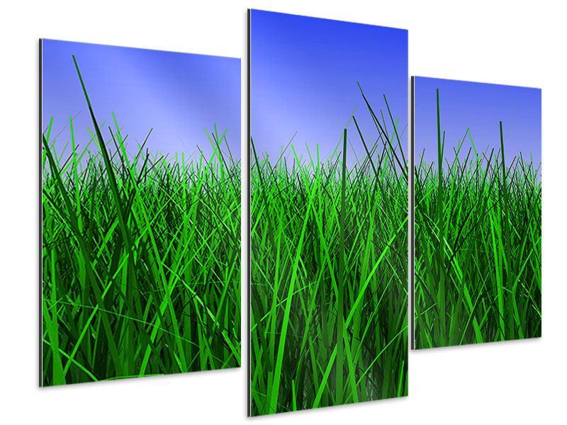 Aluminiumbild 3-teilig modern Im Gras