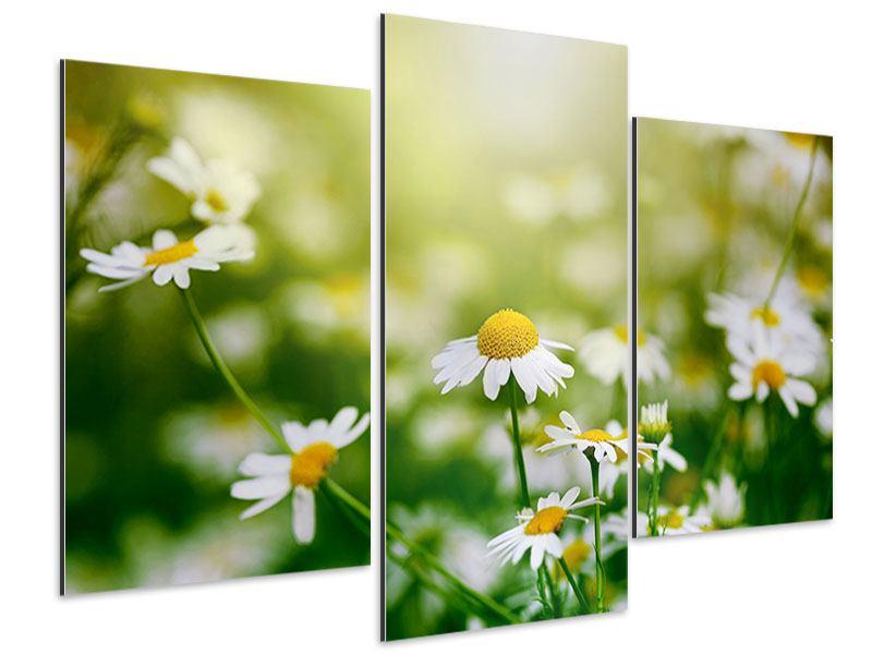 Aluminiumbild 3-teilig modern Die Gänseblümchen