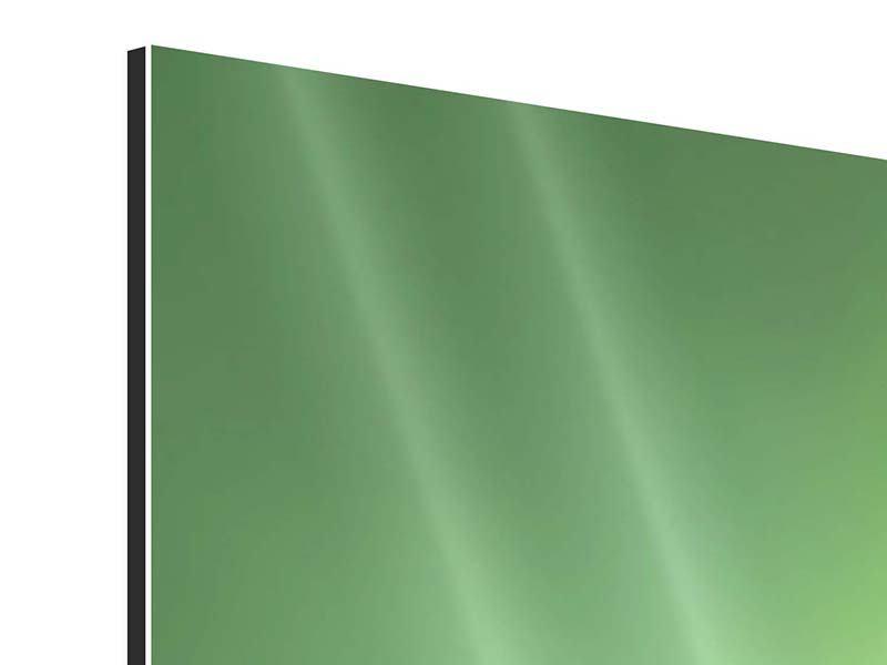 Aluminiumbild 3-teilig modern Marienkäfer XXL