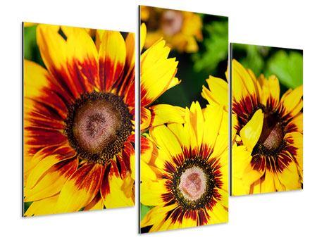 Aluminiumbild 3-teilig modern Reife Sonnenblumen