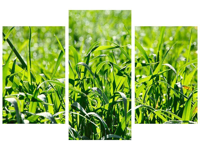 Aluminiumbild 3-teilig modern Sonniges Gras