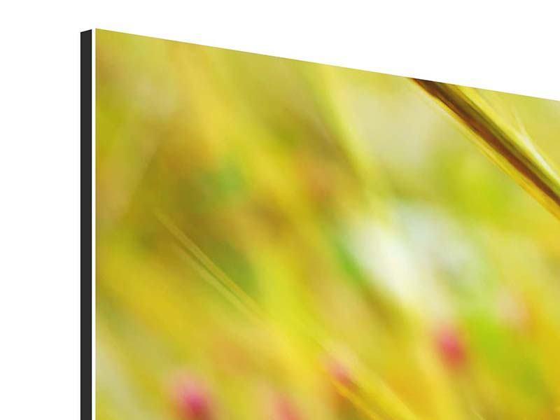 Aluminiumbild 3-teilig modern Das Weizenfeld