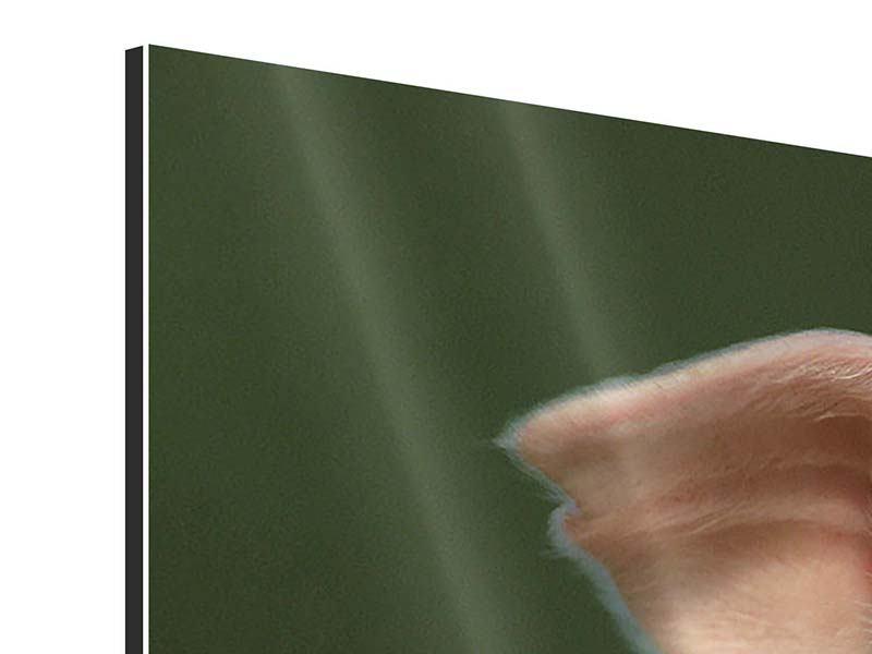 Aluminiumbild 3-teilig modern Schweinchen Namens Babe