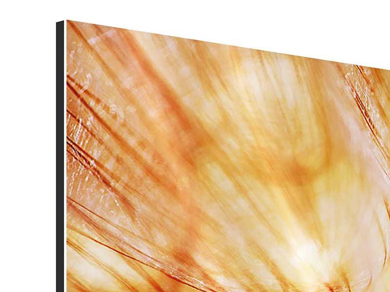 Aluminiumbild 3-teilig modern Close Up Pusteblume im Licht