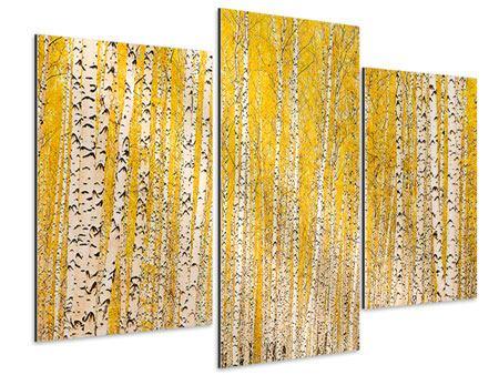 Aluminiumbild 3-teilig modern Der Birkenwald im Herbst